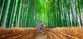 Woman in traditional dress walking in a bamboo forest in Japan